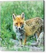 Fox In The Rocks Canvas Print