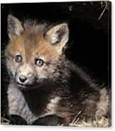 Fox Kit In Den Canvas Print