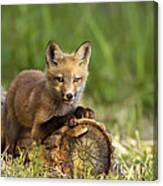 Fox Pup In The Morning Light Canvas Print