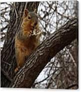 Fox Squirrel 1 Canvas Print