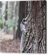 Fox Squirrel Vertical Canvas Print