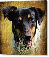 Fox Terrier Dog Canvas Print