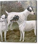 Fox Terriers Canvas Print