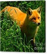 Fox Trot Canvas Print