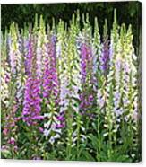 Foxglove Garden In Golden Gate Park Canvas Print