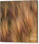 Foxtail Canvas Print