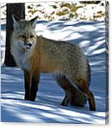 Foxy Shadows Canvas Print