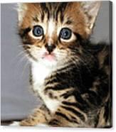 Foxy The Kittens Big Eyes Canvas Print