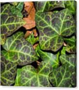 Fractal Ivy Canvas Print