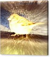 Like A Bird Or A Fragile Pedestrian Canvas Print