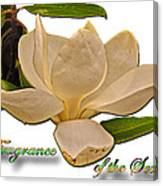 Fragrance Of The South Canvas Print
