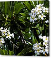 Fragrant Clusters Canvas Print