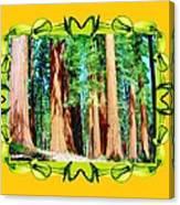 Framed Sequoias Canvas Print