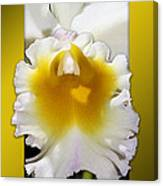 Framed White Orchid Canvas Print