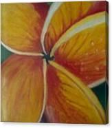 Frangipani Bloom Canvas Print