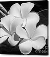 Frangipani In Black And White Canvas Print
