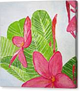 Frangipani Tree Canvas Print