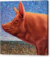 Free Range Pig Canvas Print