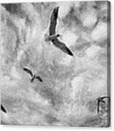 Freedom Impasto Bw Canvas Print