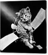 Frees Kittens, C1914 Canvas Print