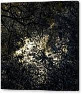 Frequencies Of Nature Canvas Print