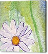 Fresh As A Daisy 1. Canvas Print