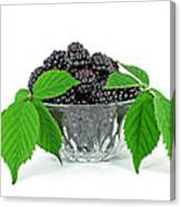 Fresh Blackberries In Glass Bowl Canvas Print