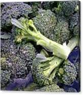 Fresh Broccoli Canvas Print