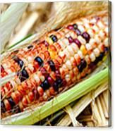 Fresh Decorative Indian Corn Canvas Print