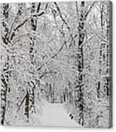 Fresh Fallen Snow Canvas Print