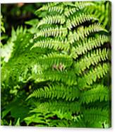 Fresh Fern - Featured 2 Canvas Print