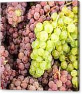 Fresh Grapes On Display Canvas Print