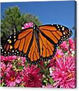 Fresh Monarch Butterfly Canvas Print