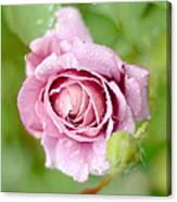 Fresh Morning Rose Canvas Print
