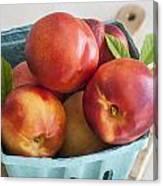 Fresh Nectarines Canvas Print