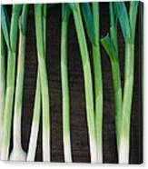 Fresh Picked Garlic Canvas Print