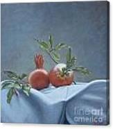 Fresh-picked Pomegranates Canvas Print