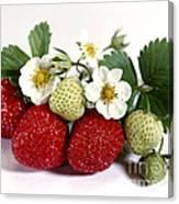 Gardenfresh Strawberries Canvas Print