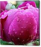 Fresh Rain Canvas Print