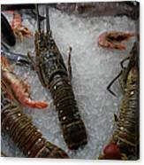 Fresh Santorini Lobsters Canvas Print