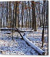 Fresh Snow In The Woods Canvas Print