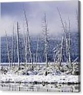Fresh Snowfall And Bare Trees Canvas Print