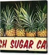 Fresh Sugar Cane Canvas Print