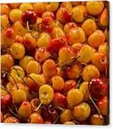 Fresh Yellow Cherries Canvas Print