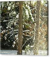 Freshly Blowing Snow Canvas Print