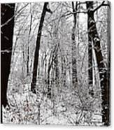 Freshly Fallen Snow Canvas Print