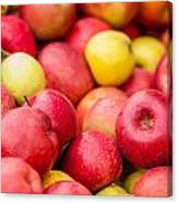 Freshly Harvested Colorful Crimson Crisp Apples On Display At Th Canvas Print