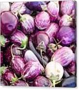 Freshly Harvested Purple Eggplants Canvas Print