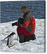 Friend Of The Penguins... Canvas Print
