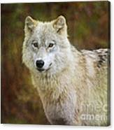 Friendly Beauty.. Canvas Print
